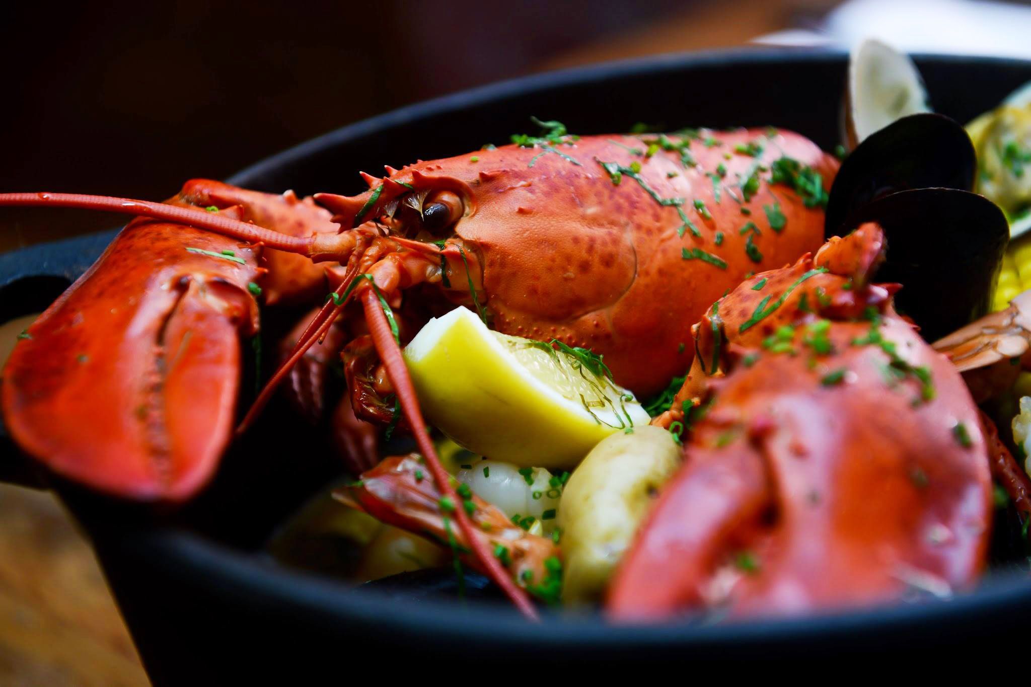 The Top Lobster Spots in New York - What Should We Do™