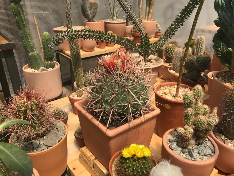 cactus-store-nyc-2017
