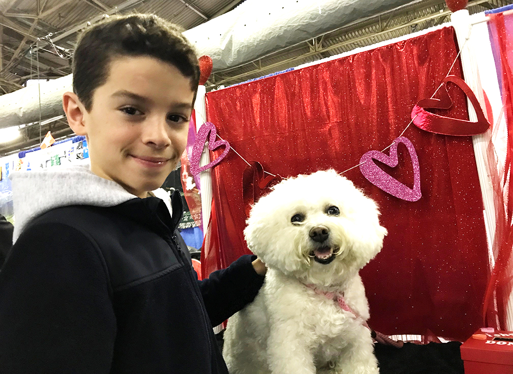 westminster dog show 2019
