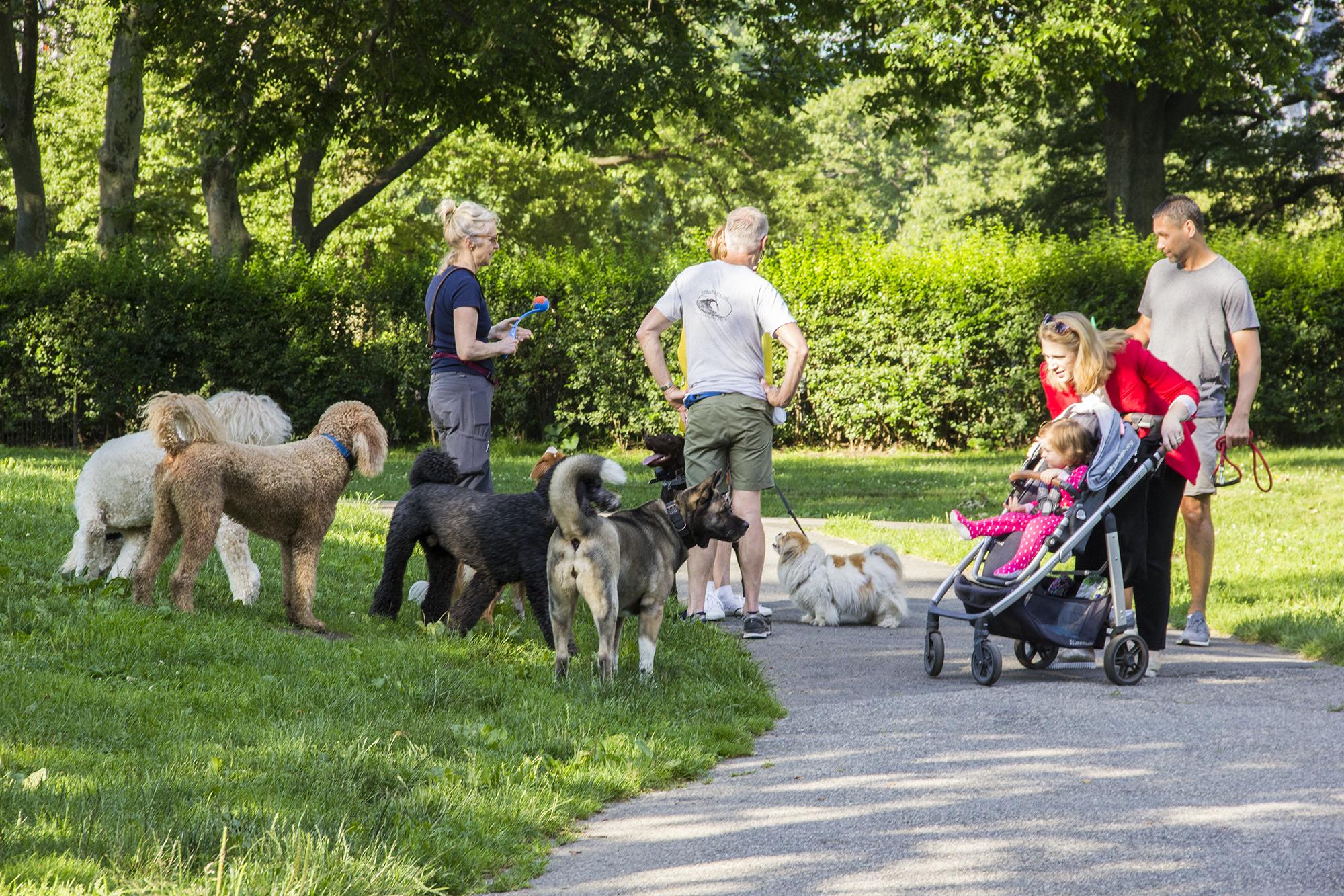 central park dog run